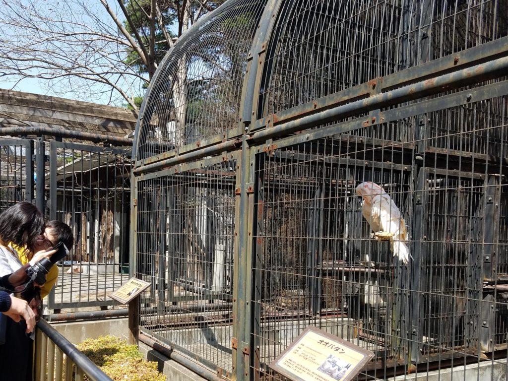 大宮公園小動物公園1