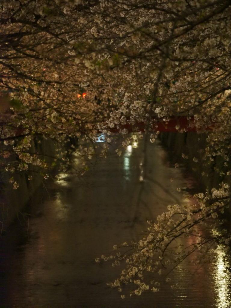 目黒川の桜祭り3