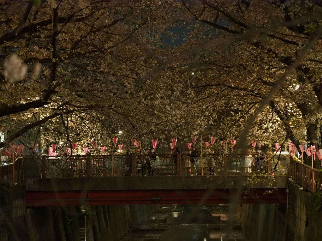 目黒川の桜祭り5