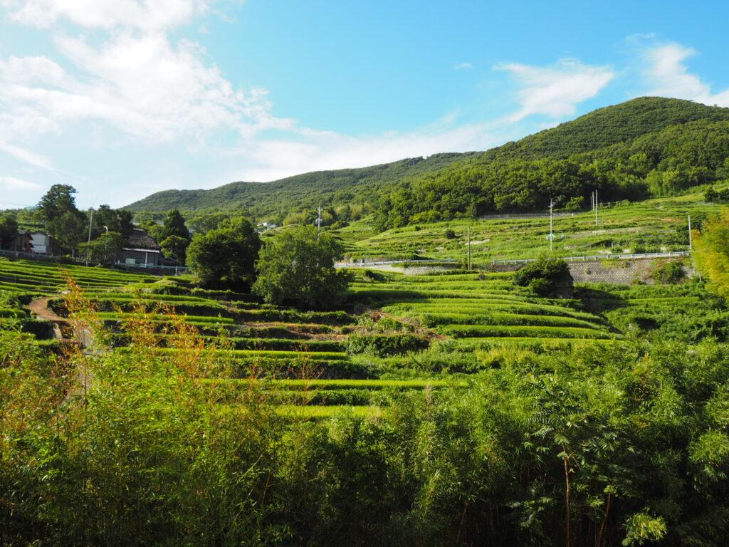 小豆島の棚田