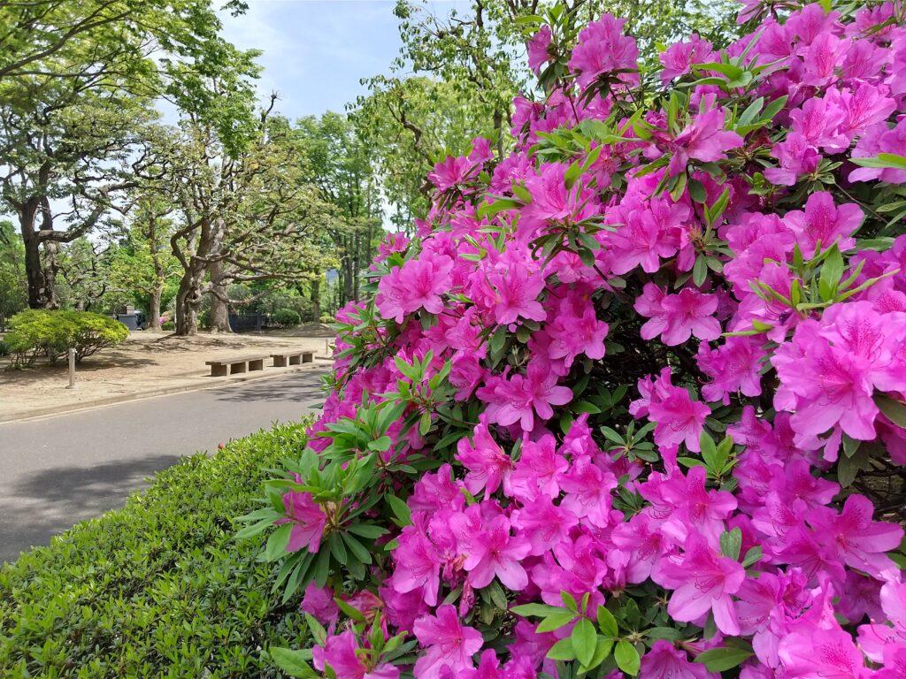 憲政記念公園3